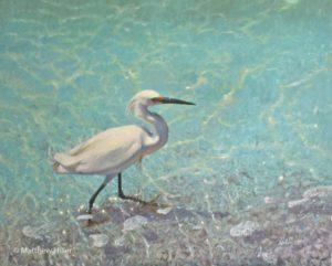 night heron brookes adam