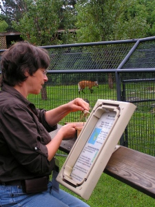 Karryl Working at the Rolling Hills Zoo