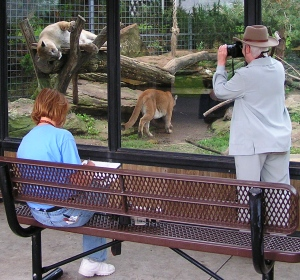 SAA Artists gathering references at the zoo