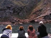 SAA artists watching sea lions