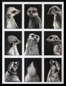 Patrick Hedges – Meerkat Montage