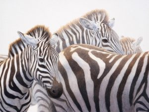 Cary Hunkel – Stripes and More