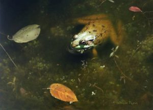 Patricia Pepin – Frogness