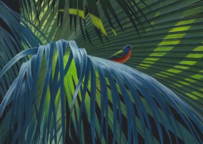 Agnew, John N.- Painted Bunting On Palm