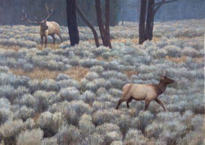 Bateman, Robert M. - Elk in Sage