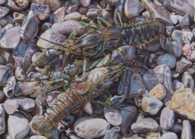 Frentner, Rusty - Washed Ashore