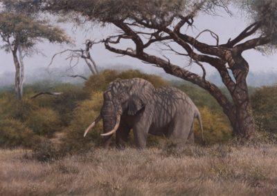 Gray, Peter - Acacia Veil