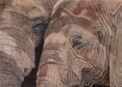 Gylling, Gemma - BFFs - Save The Elephants