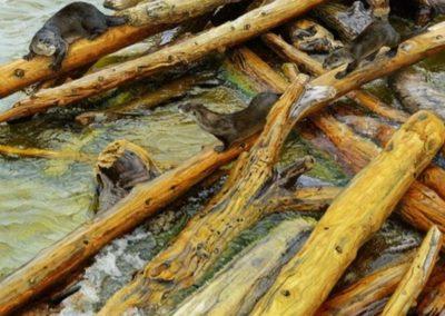 Kiehm, David - Driftwood