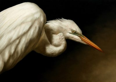 Offeman, James - Great Egret