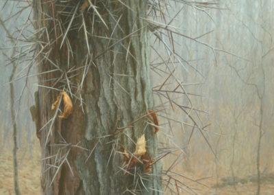 Gandert, Jeff  - Needles-White-breasted Nuthatch & Honey Locust