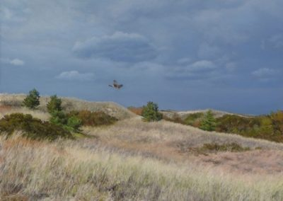 House, Cindy  - Harrier Hunting