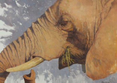 Kratter, Paul  - Elephant Grazing