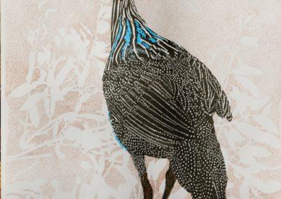 Thornton, Rita  - Vulturine Guineafowl