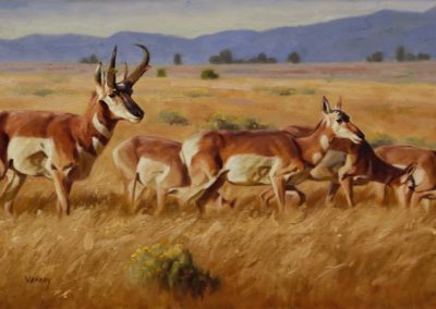 Vannoy, Sally  - Path Of The Pronghorn